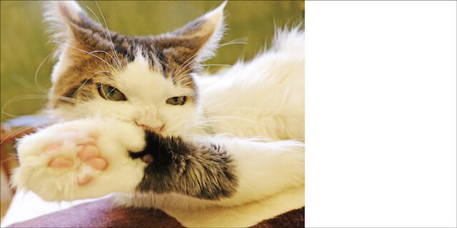 写真集「にゃ~ん手ね」肉球を見せる猫