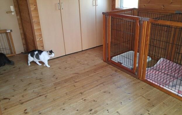 犬猫カフェ「ほごっこCAFE」のペットホテル