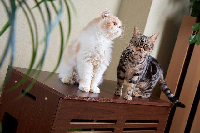猫トイレカバー「Caterior(キャッテリア)の上に乗る猫たち