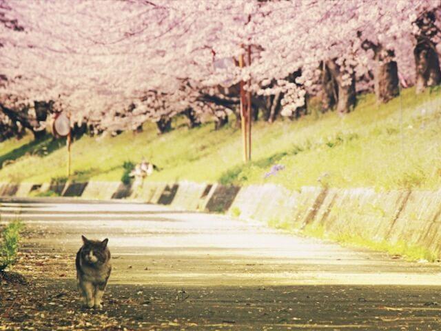 47名の芸術家による猫作品が集結「ねこらんまん展 in ぐんま」