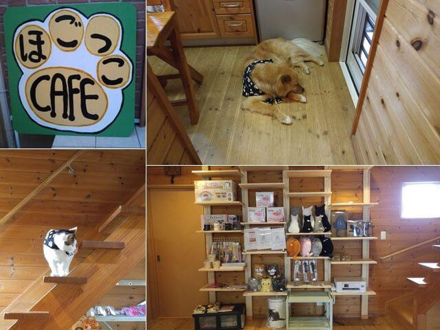 岡山に里親募集型の犬猫カフェ「ほごっこCAFE」がオープン
