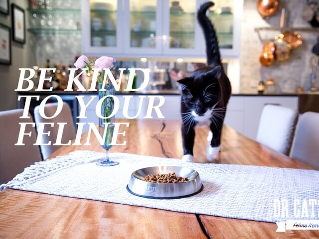 猫のヒゲ疲れを改善する、優しいフードボウル「ドクター・キャッツビー(DR. CATSBYS)」