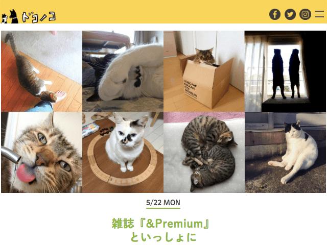 犬猫の写真投稿SNS「ドコノコ」×女性誌「&Premium(アンド プレミアム)」のネコ写真募集企画