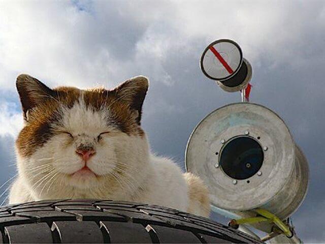 猫写真グループによる展示会「うめぐみ写真展11」が開催中