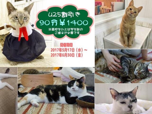 猫カフェれおんグループが学割開始、若年層に保護猫の認知拡大を目指す