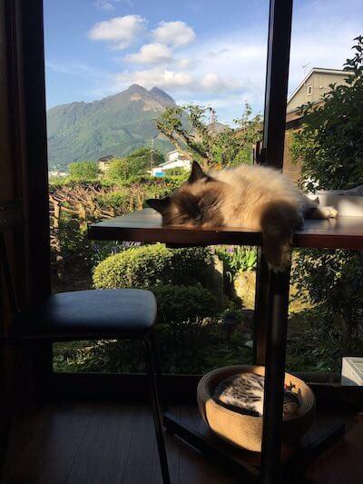 自然豊かな景色も魅力、湯布院の猫カフェ「笑ねこカフェ」