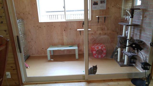 犬猫カフェ「ほごっこCAFE」の店内