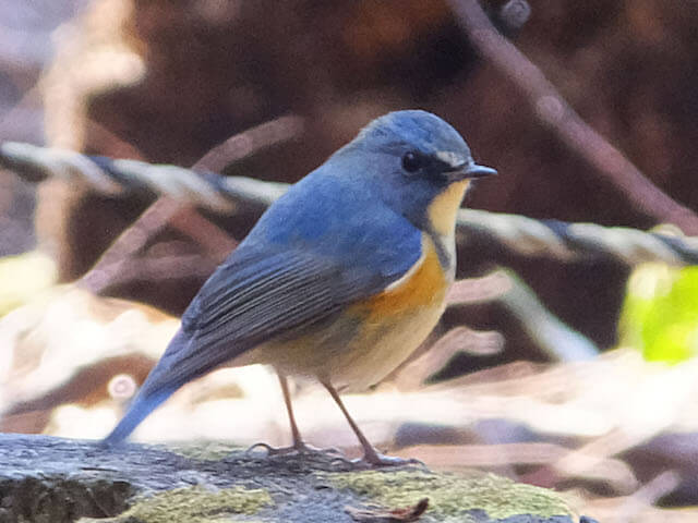 相模原市内で撮影した野鳥の写真
