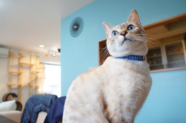 プレーンタイプの首輪を付けた猫