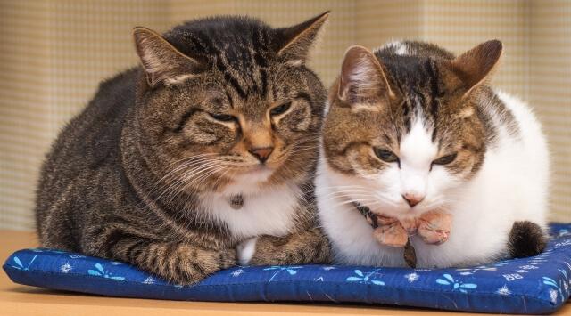 猫の仲良し写真