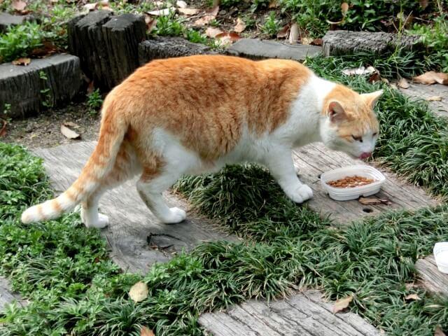 ご飯を食べる野良猫・地域猫
