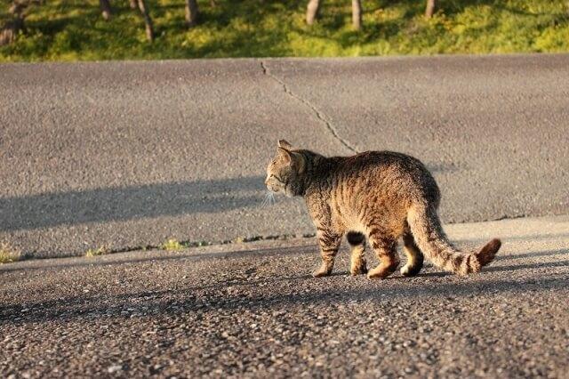 道路を歩く野良猫