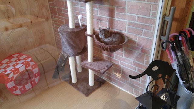 犬猫カフェ「ほごっこCAFE」の保護猫&にゃんこるーむ