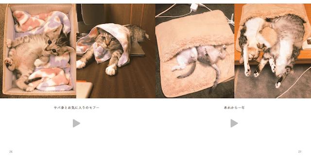 子猫時代からの成長ぶりも分かる、ココニャさんちの障子破り猫軍団