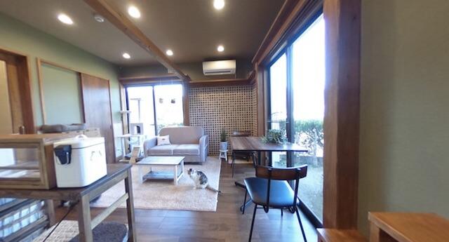 湯布院の猫カフェ「笑ねこカフェ」の店内
