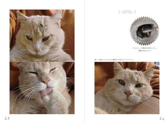 「縁側ネコ一家 ありのまま」書籍イメージ2
