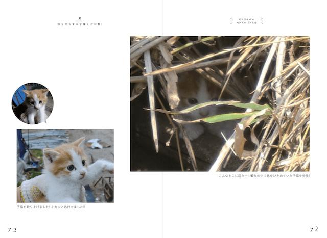「縁側ネコ一家 ありのまま」書籍イメージ3