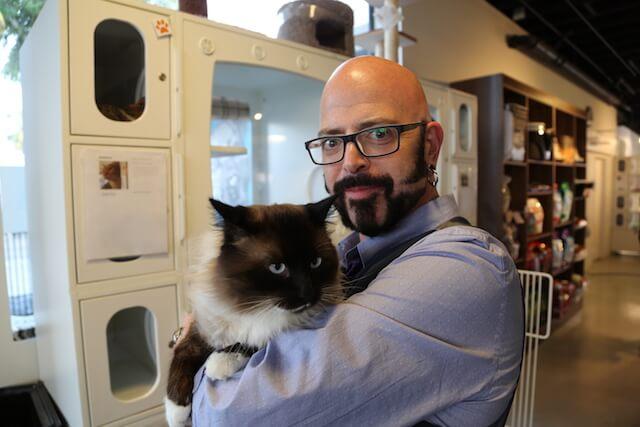 「猫ヘルパー シーズン8~猫のしつけ教えます~」第五話、にゃんにゃんインポッシブル