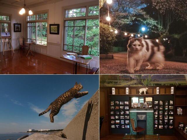 写真家・内田園子さんのネコ写真展がレトロなギャラリーで開催