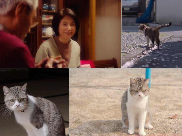 父の日に贈る「お父さんと猫の物語」三菱電機が動画を公開
