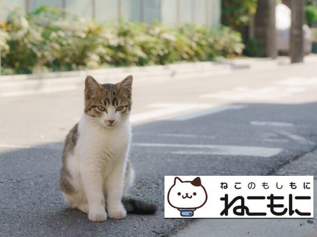 愛猫の位置を特定する「ねこもに」ペット探偵による捜索サービス保険を追加