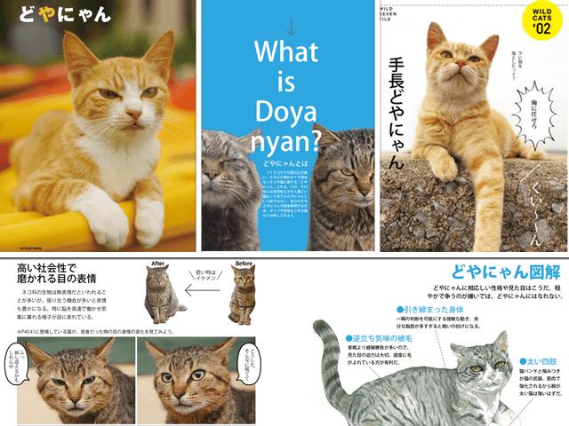 ドヤ顔の猫ばかりを収録したムック本「どやにゃん。ドヤ顔猫の生き方」