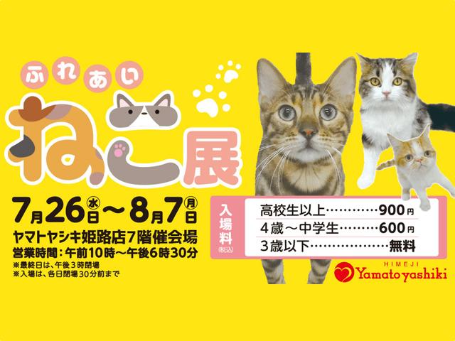 世界中の珍しい猫と触れ合える「ふれあい ねこ展」が姫路で開催