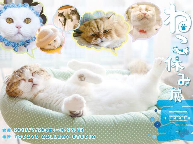猫まみれの1ヶ月間「ねこ休み展 夏 2017」が7/28から開催