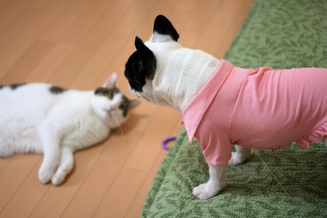 犬猫の仲良しイメージ写真