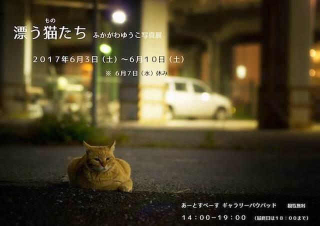 深川裕子さんによるネコの写真展「漂う猫(もの)たち」