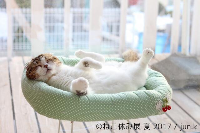 人気ネコ、どんぐりが寝ている写真 by jun.k