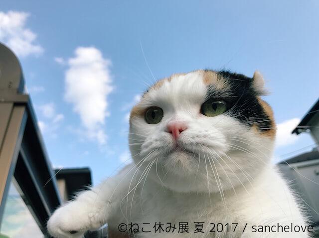 人気ネコのうらら/sanchelove