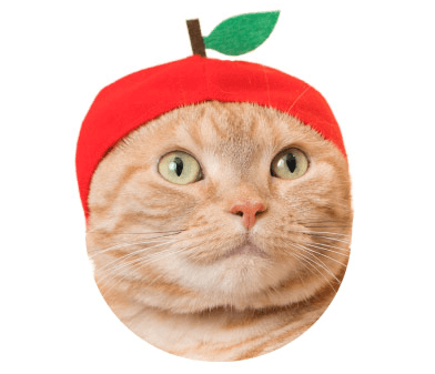 猫のかぶりもの「かわいい かわいい ねこフルーツちゃん」、りんごバージョン
