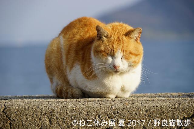 野良猫散歩