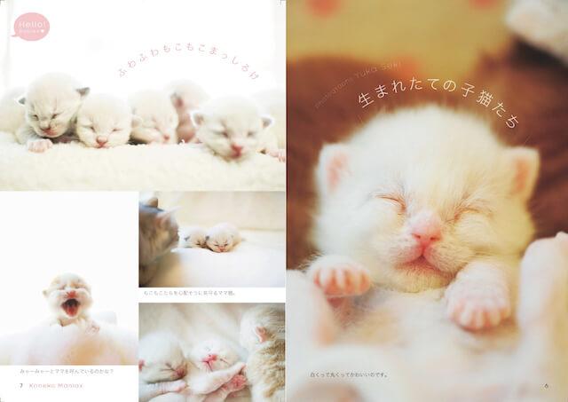 関由香さんが撮影した生まれたての子猫の写真
