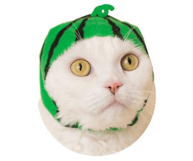 猫のかぶりもの「かわいい かわいい ねこフルーツちゃん」、スイカバージョン