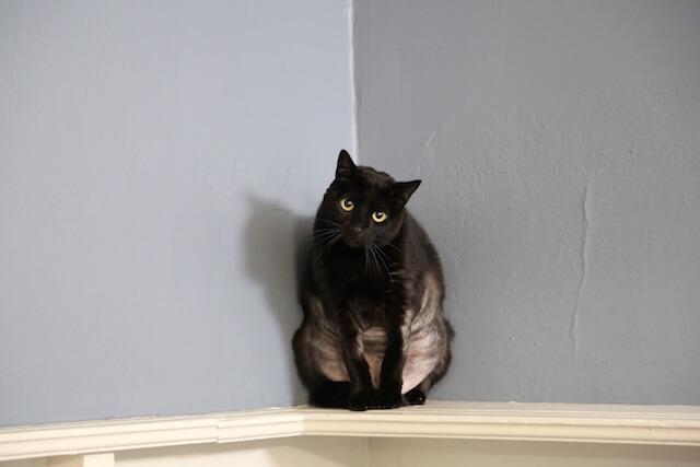 「猫ヘルパー シーズン8~猫のしつけ教えます~」に登場する問題行動を抱えた猫