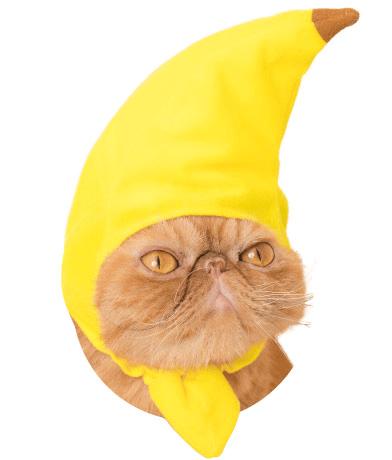 猫のかぶりもの「かわいい かわいい ねこフルーツちゃん」、バナナバージョン