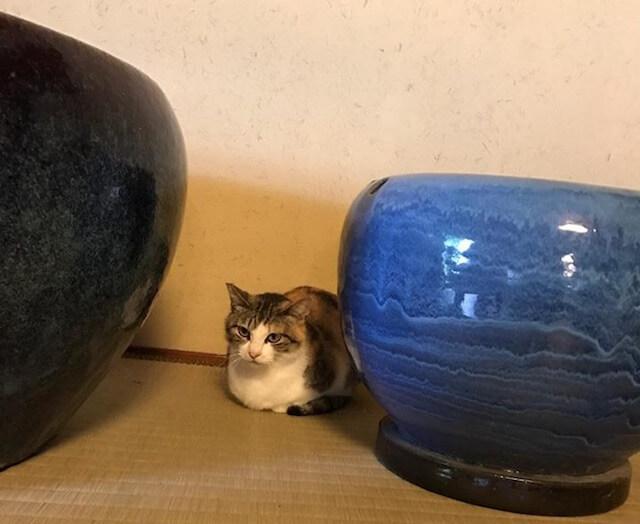 保護猫のおはぎ