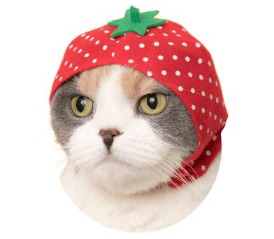 猫のかぶりもの「かわいい かわいい ねこフルーツちゃん」、いちごバージョン