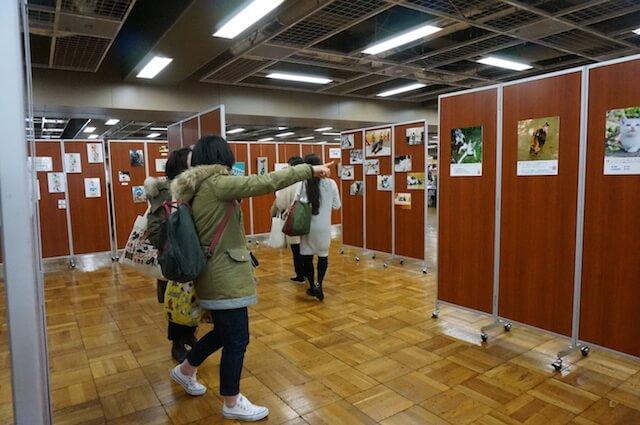 著名人の猫を集めた写真展示