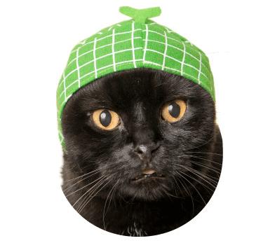 猫のかぶりもの「かわいい かわいい ねこフルーツちゃん」、メロンバージョン
