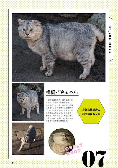 ドヤ顔の猫、横綱どやにゃん