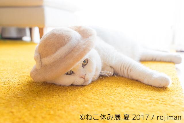 rojiman氏の猫毛帽子1
