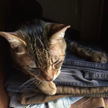 猫本屋「Cat's Meow Books(キャッツミャウブックス)の店長猫・三郎