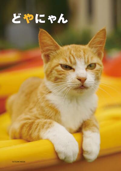 ドヤ顔でシーカヤックに手をかける茶白猫