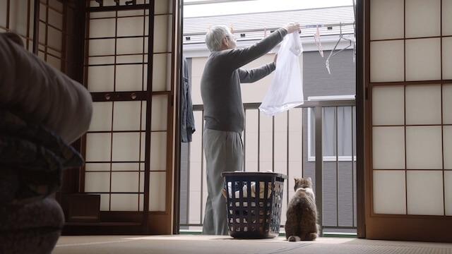 父の日の猫動画、洗濯物を干すお父さんと側に佇む猫