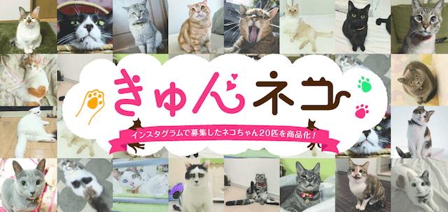 3COINSがインスタグラムで募集したネコをモデルに採用した「きゅんネコ」グッズ