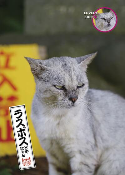 ドヤ顔の猫、ラスボスどやにゃん