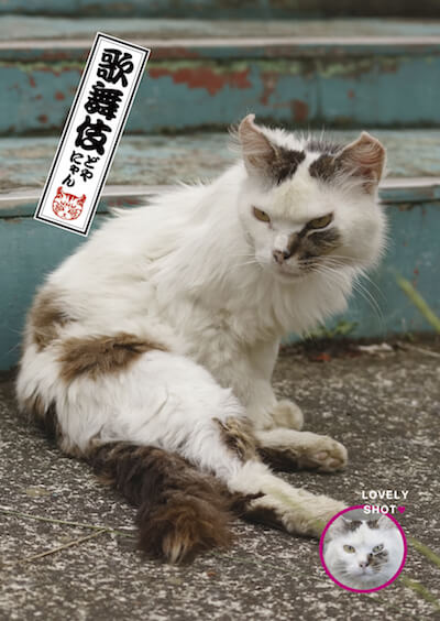 歌舞伎風なドヤ顔の猫、どやにゃん
